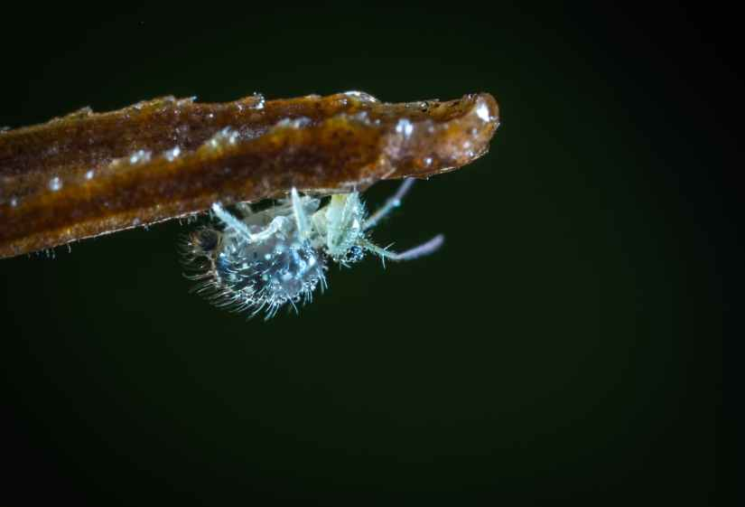 tilt shift lens photography of gray insect