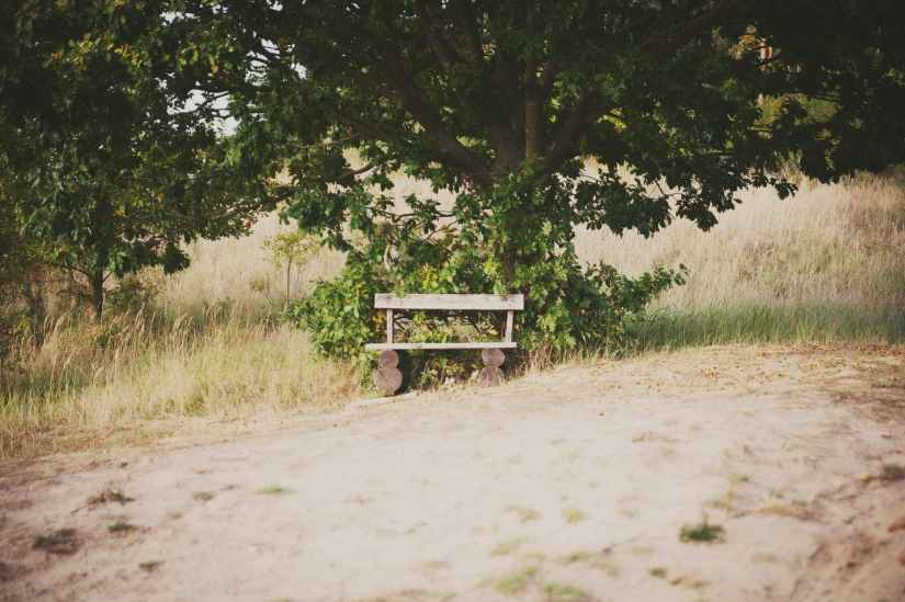 wooden bench next to tree