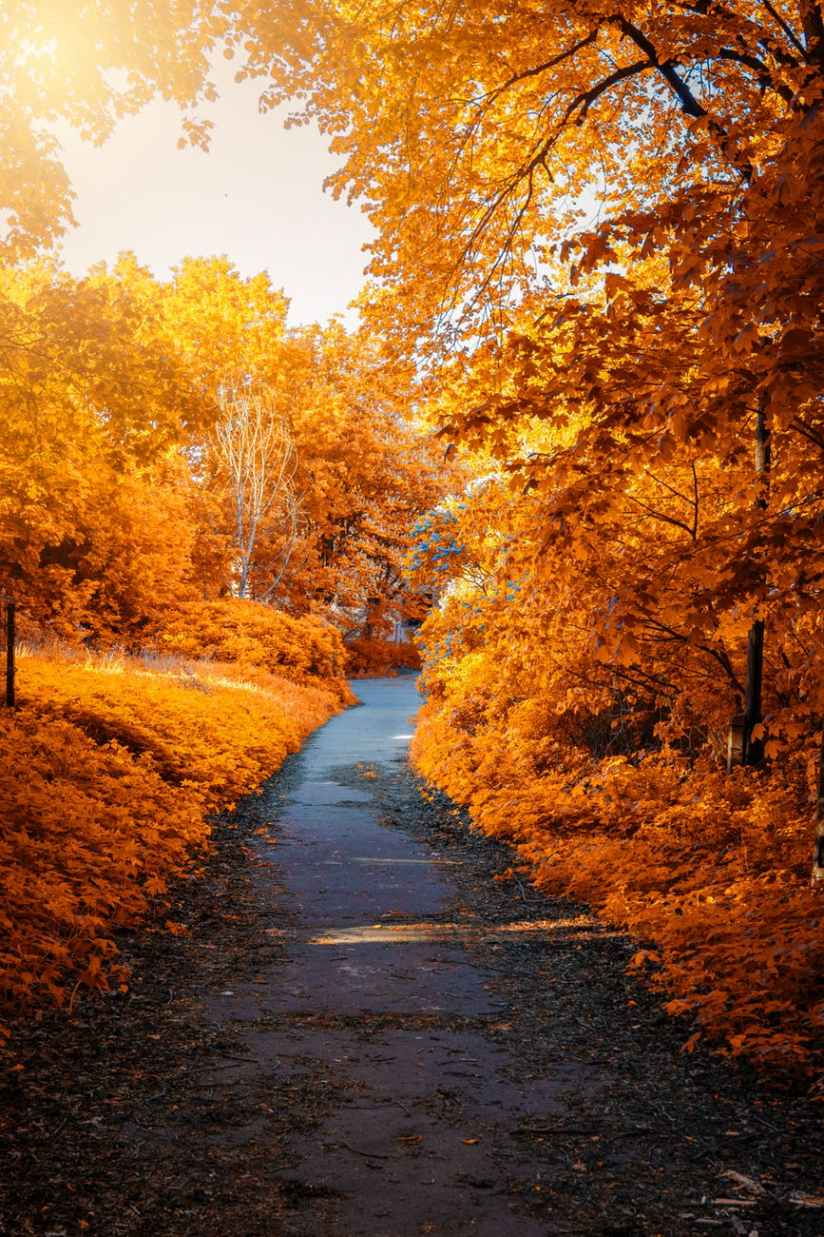 photo of path in between woods during autumn