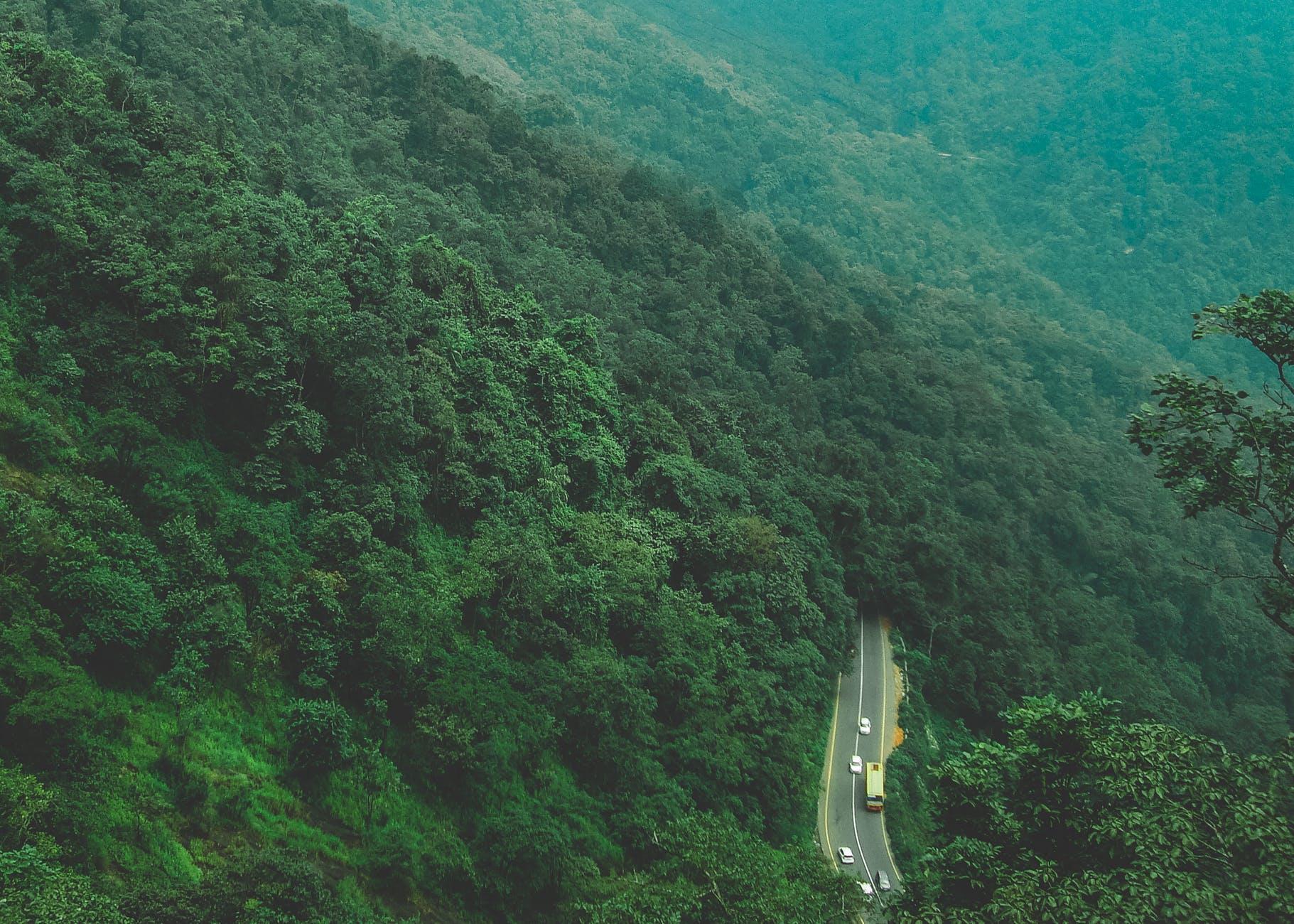 bird s eye photography of trees near road