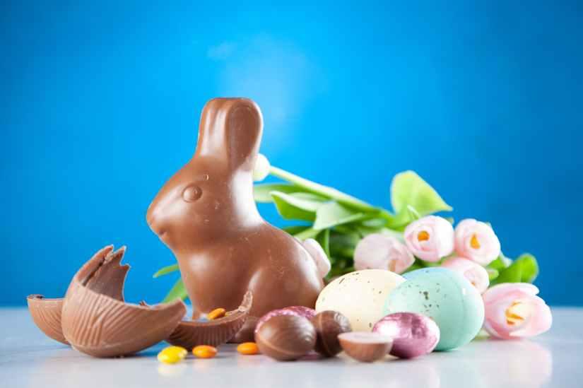 rabbit chocolate