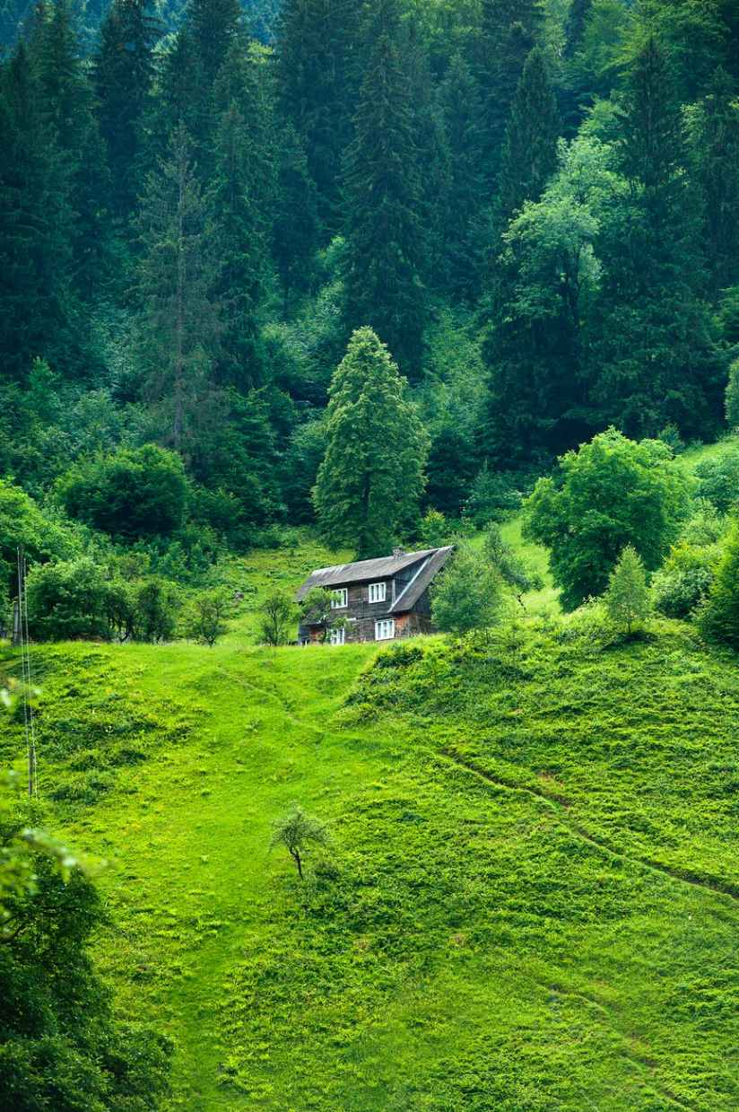 brown wooden house surrounded by green trees