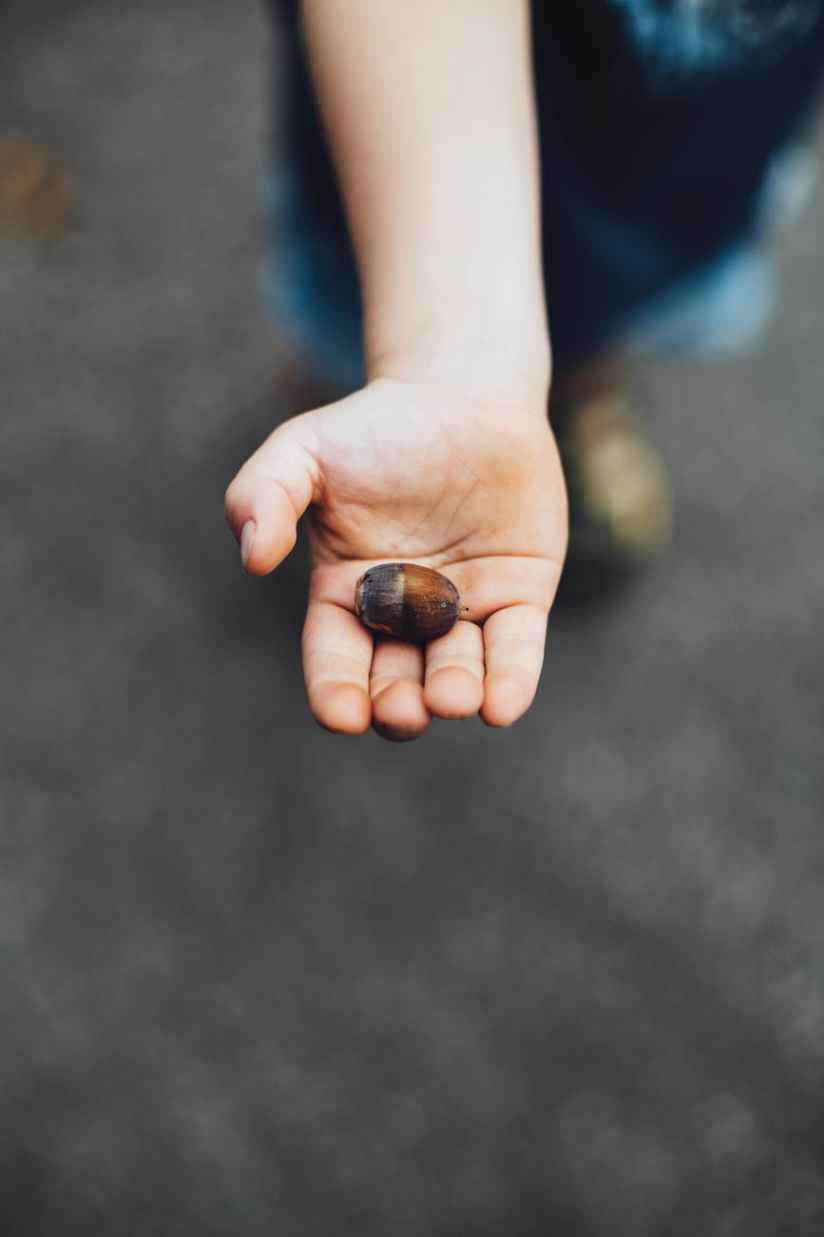 photo of person holding brown nut