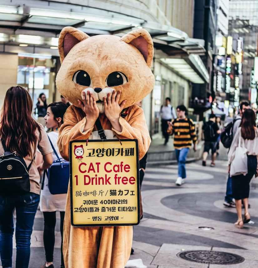 cat mascot outdoors
