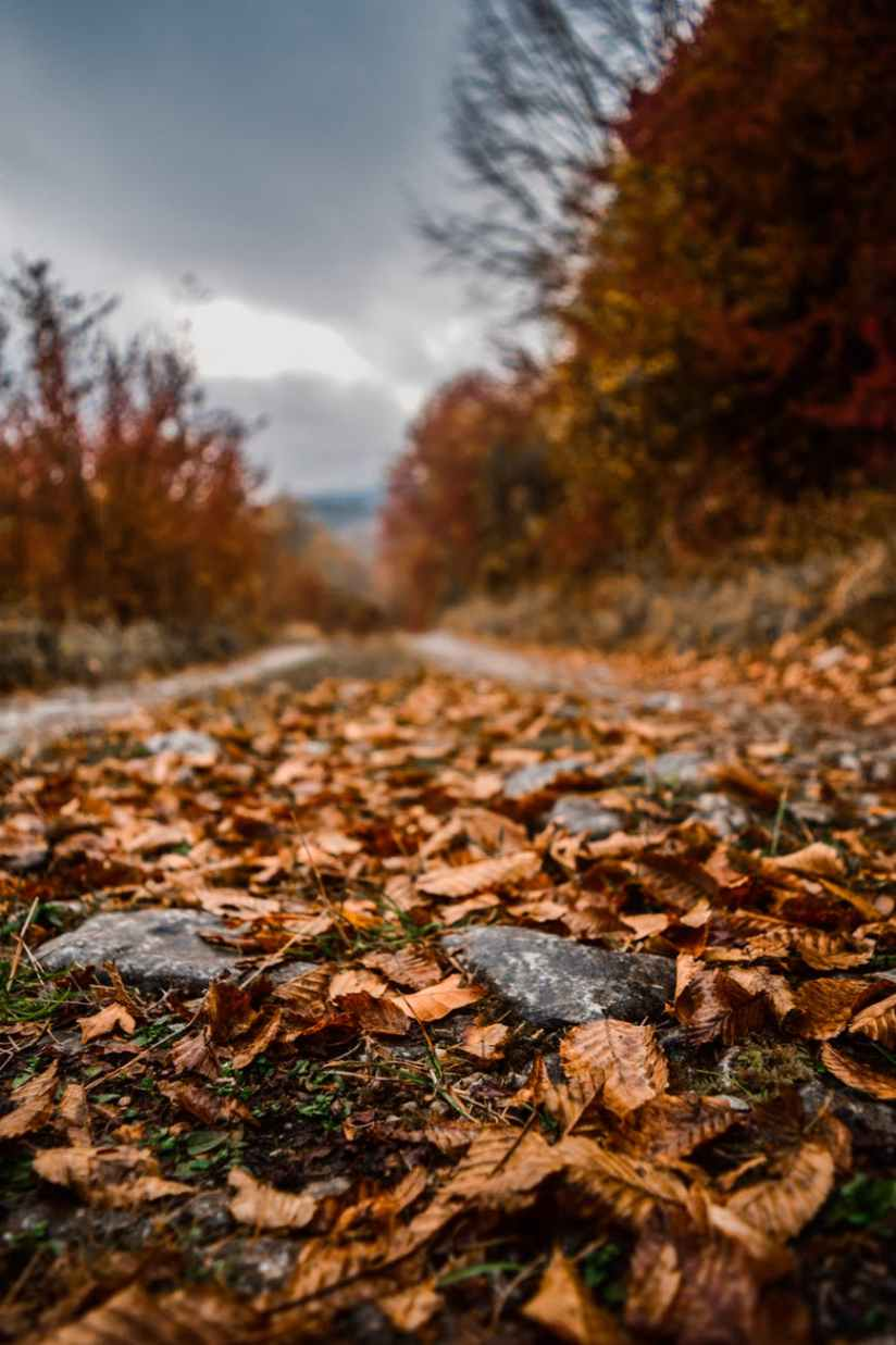 close up photo of fallen leaves